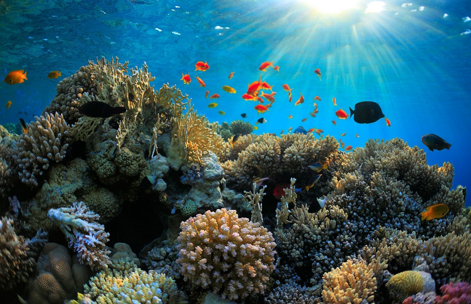 Coral Reefs of the South Florida Reef Tract